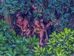 suku-di-hutan-hujan-amazon_20170814_113817.jpg