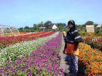 surati-menjaga-kebun-bunga-miliknya-meski-tak-ada-pengunjung-yang-datang-minggu-1252019.jpg