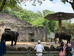 Syarat Berkunjung ke Taman Margasatwa Ragunan, Wajib Daftar Online H-1 Liburan