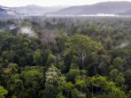 taman-nasional-gunung-leuser_20180314_211428.jpg