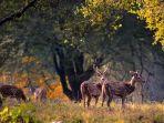 Siapa Bilang Hutan Belantara Menakutkan? 6 Lokasi Ini Siap Menyihirmu dengan Pesona Kecantikannya