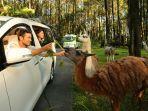 taman-safari-prigen_20180425_201333.jpg