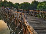 taman-wisata-alam-mangrove-di-jakarta.jpg