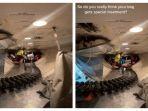 tangkap-layar-petugas-bagasi-pesawat-saat-menata-koper-di-dalam-pesawat.jpg