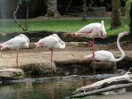 tempat-wisata-bali-bird-park.jpg