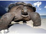 tortoise-kura-kura-raksasa_20181015_104847.jpg
