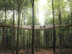 treetop-spiral-walkway_20171009_142743.jpg