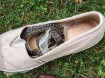ular-di-sepatu.jpg