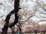 yoyogi-park.jpg