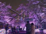 yozakura-jewellumination.jpg