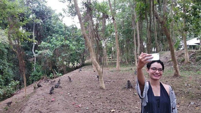 Melihat Kehidupan Alami Monyet di Monkey River Kemenuh