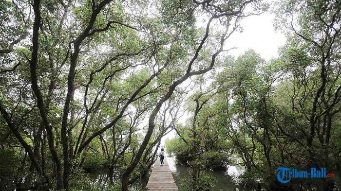 Objek Wisata Mangrove Denpasar Bali