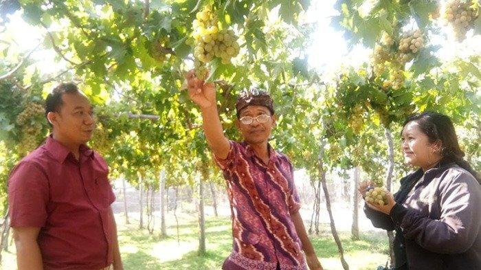 Mengenal Kampung Bandeng Dan Agrowisata Di Desa Sanggalangit, Ini Berbagai Wisata Yang Ditawarkan