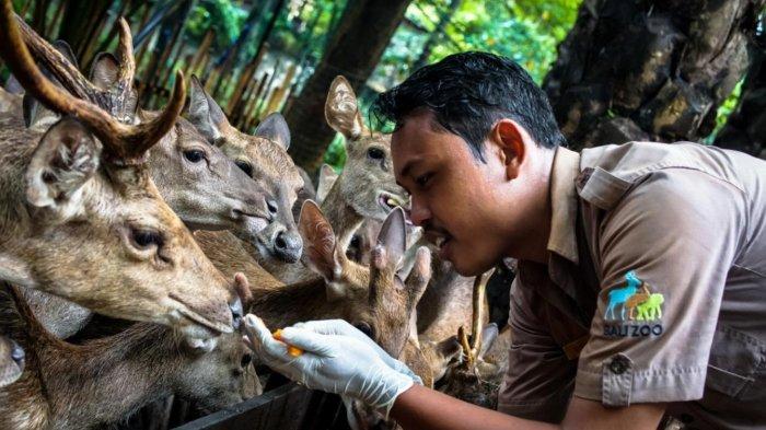 Cegah Penyebaran Corona, Bali Zoo Tutup Sementara Hingga 31 Maret 2020