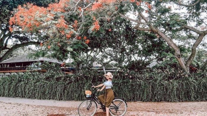 suasana di Pantai Karang yang terdapat sebuah pohon yang menjadi spot foto favorit dan instagramable, Rabu (2/12/2020)