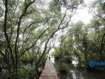 objek-wisata-mangrove-denpasar-bali-2.jpg