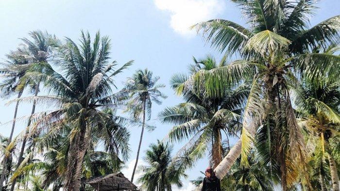 Nikmati Keindahan Alam Objek Wisata Pulau Abang Batam Sambil Snorkeling