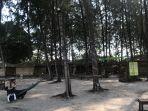 suasana-wisata-pohon-pinus-di-bintan-blue-coral-kabupaten-bintan.jpg