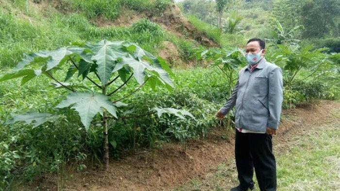 Agrowisata Bukit Cikedud,Lembursitu, Sukabumi