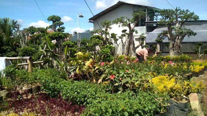 Aneka Tanaman Hias Tersedia di Kawasan Agrowisata Cihideung Kabupaten Bandung Barat