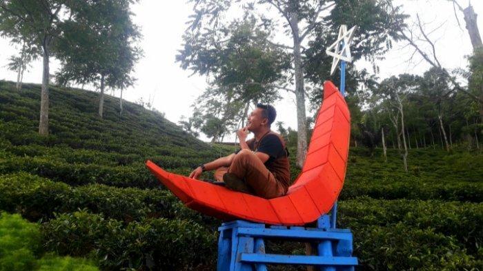 Agrowisata perkebunan teh di Dusun Sukanyiru, Desa Sukajadi, Kecamatan Wado, Kabupaten Sumedang