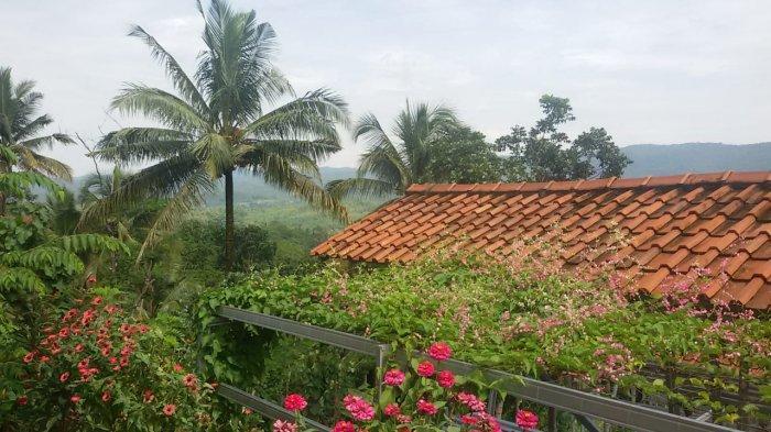 Bunga air mata pengantin di Desa Banjaranyar, Ciamis