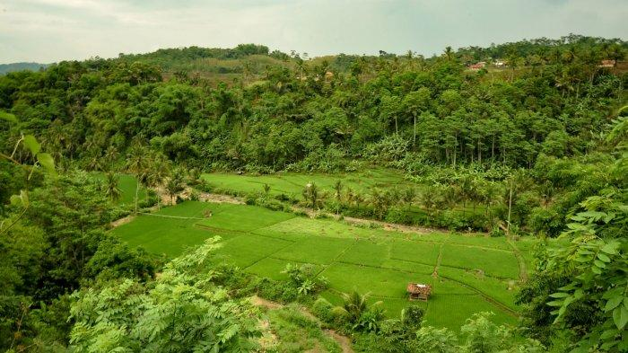 kawasan sekitar Curug Walanda Citatah di Kampung Gugunturan, RT3/12, Desa Citatah Kecamatan Cipatat, Kabupaten Bandung Barat,