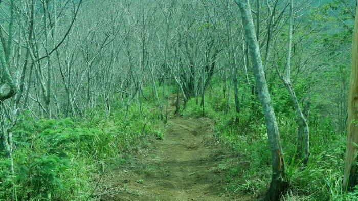 Hutan Mati di Desa Mekarjaya, Kecamatan Arjasari atau sebelah timur objek wisata Gunung Puntang.
