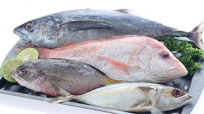 ilustrasi ikan nila