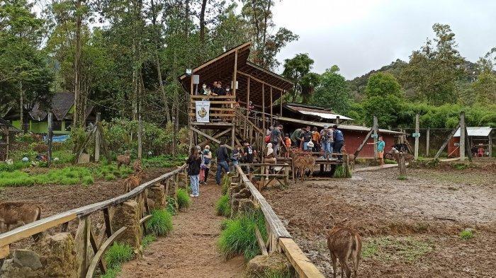 Wisata memberi makan rusa di Kampung Cai Rancaupas, Kabupaten Bandung