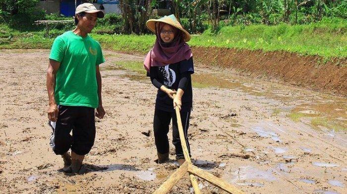 Seorang wisatawan lokal mencoba menggarap sawah di Kampung Agrowisata Mulyaharja, Kota Bogor