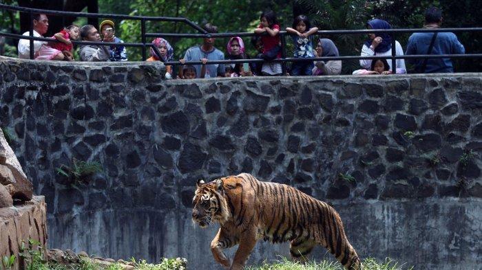 Kebun Binatang Kota Bandung (Bandung Zoo)
