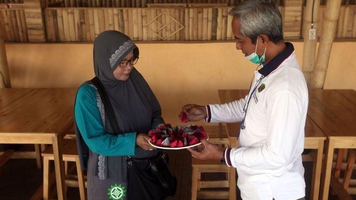 Menikmati kesegaran buah naga di Kebun Buah Naga Poernama, Kampung Jamban Sari, Desa Bayongbong, Kecamatan Bayongbong, Kabupaten Garut