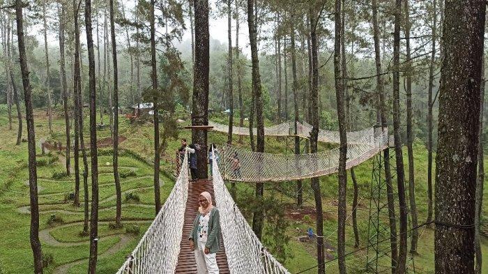 Jembatan gantung di antara pepohonan di Orchid Forest Cikole, Lembang, Kabupaten Bandung Barat.