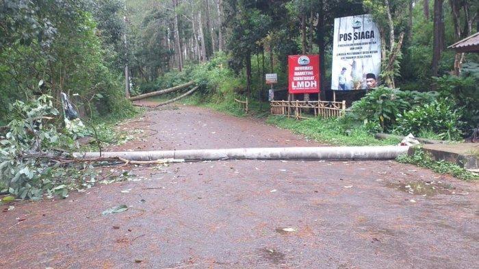 poohon tumbang melintang di jalan menuju Orchid Forest, Cikole