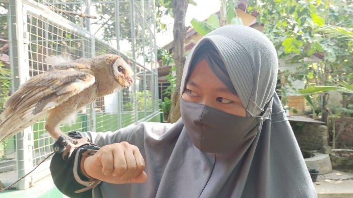 Penangkaran burung hantu oleh Kelompok Tani Sejahtera di Desa/Kecamatan Juntinyuat, Kabupaten Indramayu