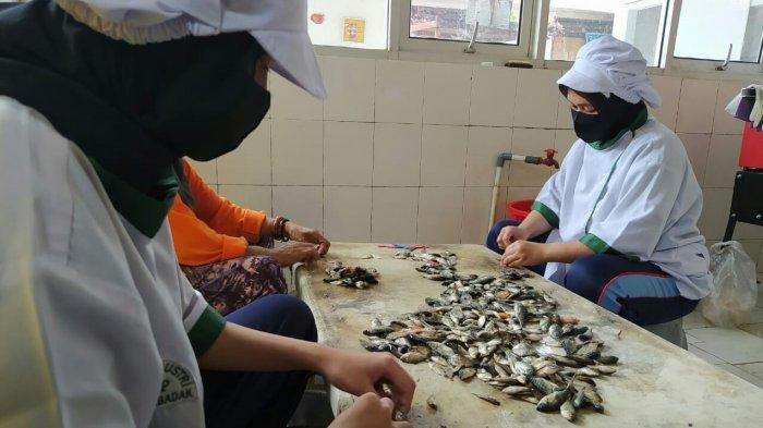 mengolah ikan kecil (baby fish) nila
