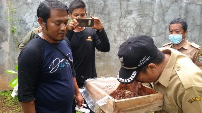 Wisata Sedot Madu Trigona di Banjaranyar, Ciamis, Sehat dan Membangkitkan Vitalitas