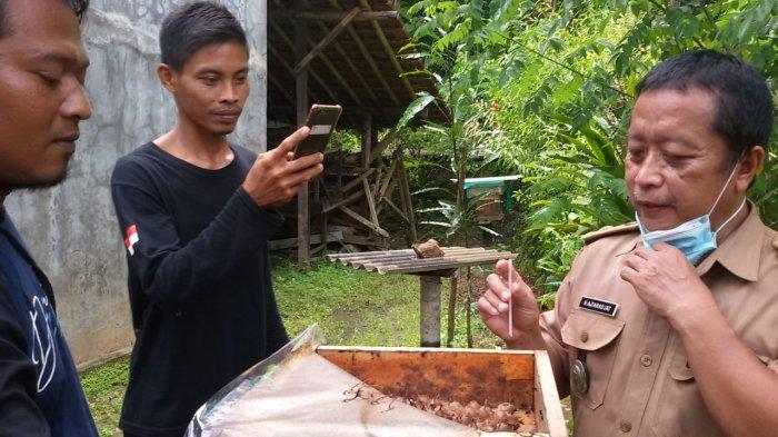 Kades banjarnayar, Tata, menyedot madu langsung dari sarang lebah trigona di rumah Ujang, peternak lebah di Dusun Sindangasih, Desa Banjaranyar, Selasa (9/2).