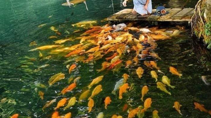Ikan-ikan di Situ Cicerem,Desa Kaduela, Kecamatan Pasawahan, Kuningan