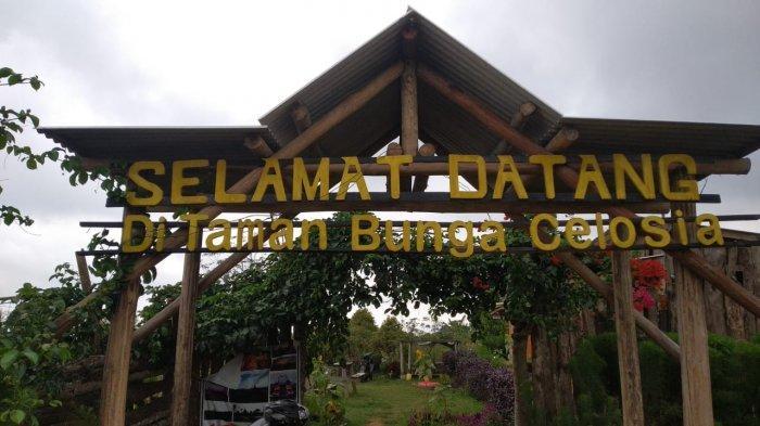 Taman Bunga Celosia di Desa Gunungkeling,Kecamatan Kuningan, Kabupaten Kuningan