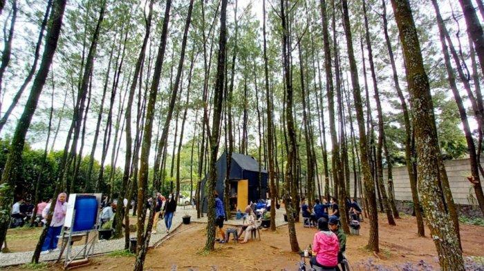 Ini Tempat Nongkrong Sembari Ngopi Asyik dan Santap Dimsum di Bawah Rindangnya Pohon Pinus