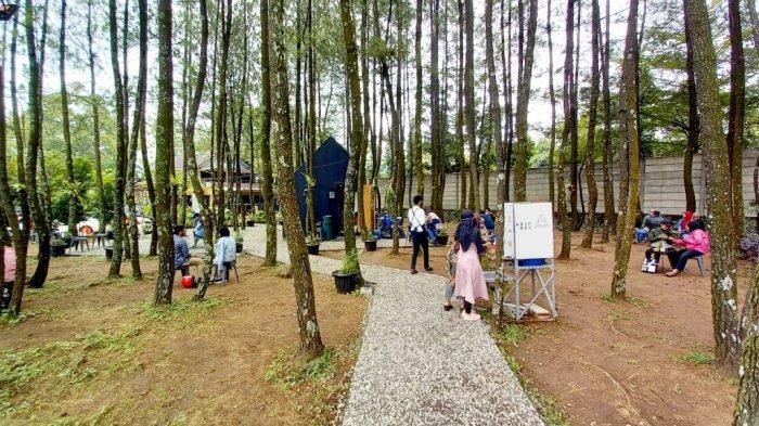 Sisi lain dari kedai kopi ini, terdapat jalan setapak berbatu yang berbaur dengan pepohonan pinus.