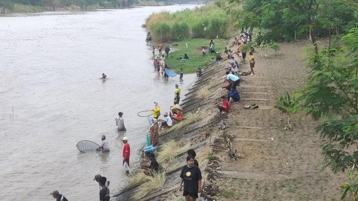 Warga Majalengka Menanti Ikan-ikan Mabuk di Tepi Sungai Cimanuk Bendung Rantang Jatitujuh