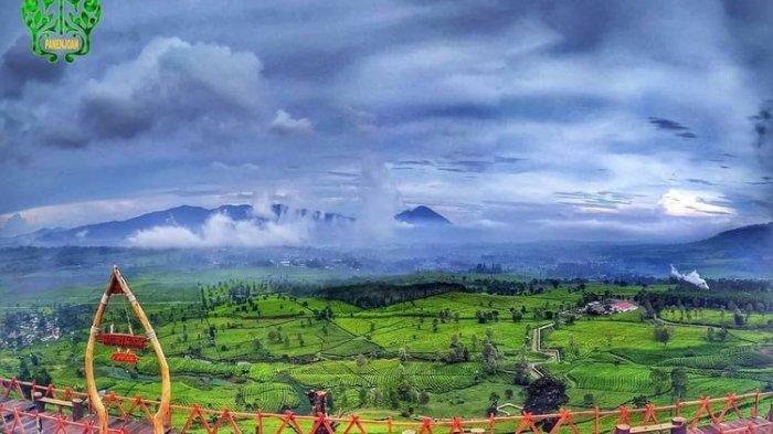Hamparan kebun teh di Wayang Windu Panenjoan, Pangalengan, Kabupaten Bandung.