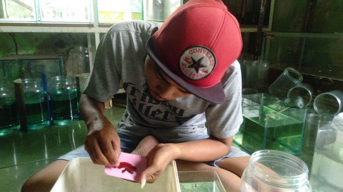 Dicky Muwardi sedangmerawat cupang di Gudang Cupang, Purwakarta