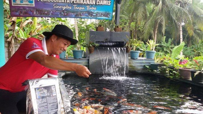 Ikan Koi ukuran Besar yang Dijual Hendar Bisa Mencapai Rp 10 Juta Per Ekor