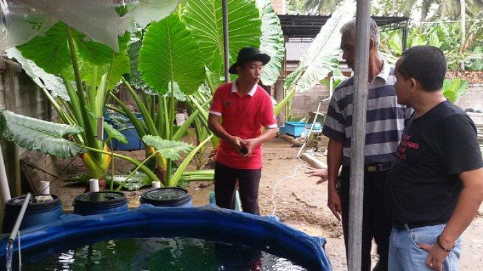 Hendar Suhendar Pembudidaya Perikanan Ciamis (PPC) di kolam koi di rumahnya,  Dusun Tanjung, Desa Tanjungsari, Kecamatan Banjaranyar, Ciamis