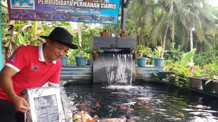 Hendar Suhendar, peternak koi di Dusun Tanjung, Desa Tanjungsari, Kecamatan Banjaranyar, Ciamis
