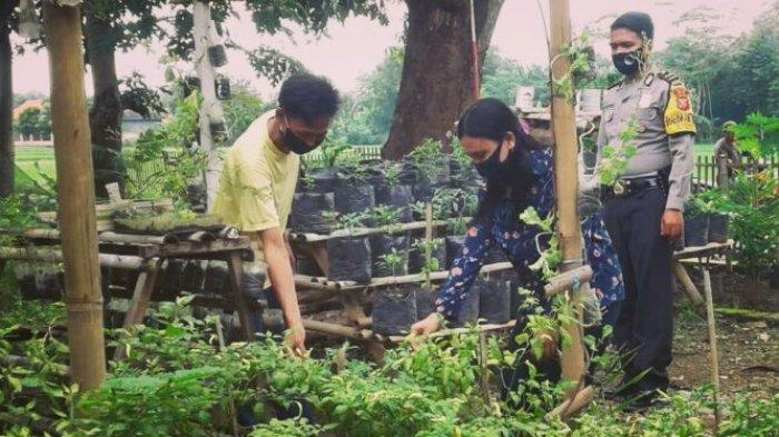 Kebun sayur pekarangan rumah warga di Desa Gambarsari, Kecamatan Pagaden, Subang